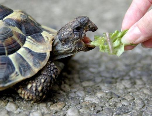 Есть ли у черепахи зубы