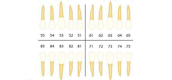 Молочные зубы по системе Виола