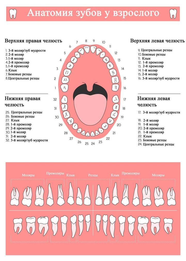 Постоянный комплект зубов