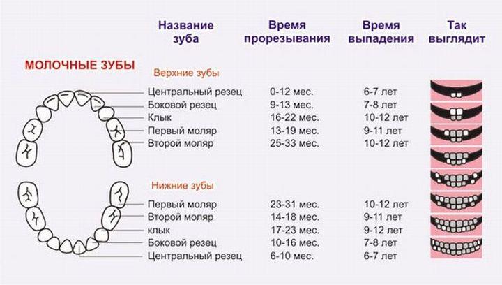 Временный прикус (молочные зубы)