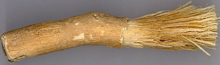 Ветка сальвадоры в качестве зубной щетки