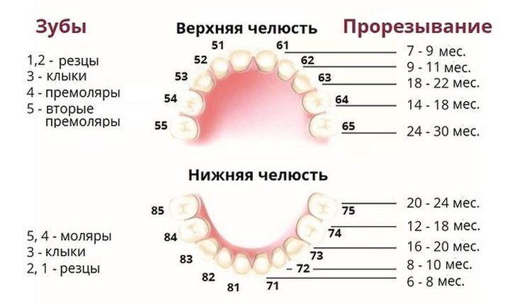 Схема прорезывания зубов у ребенка