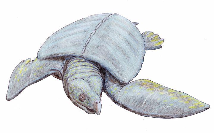 Вымершая черепаха Архелон